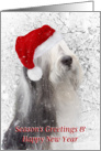 Dog Christmas Card - Bearded Collie in Santa Hat - Snowy Scene card