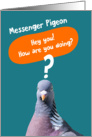 Hey You How Are You Doing - Messenger Pigeon card