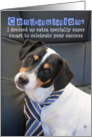 Congratulations Card - Humorous, Dog Wearing Smart Tie card