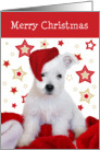 Christmas Card - Westie Puppy in Santa Hat with Stars Background card