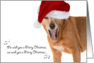 Christmas Card - Singing Rescue Dog in Santa Hat card