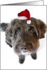 Humorous Christmas Card - Hairy Dog in Tiny Santa Hat card