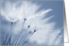 Blank Greeting Card - Blue Dandelion Clock card