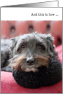 Humorous Birthday Card - Clever Dog card