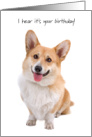 Happy Handsome Corgi Birthday Card