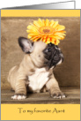 Aunt Birthday Card - Cute Puppy with Orange Flower on Head card