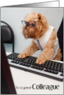 Funny Colleague Birthday Card - Griffon Dog Wearing Glasses card