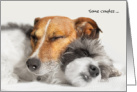 Anniversary Card - Two Snuggled Up Snoozing Dogs card
