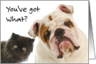 Humorous Get Well Card - Inquisitive Dog and Cat card