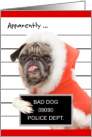 Funny Dog Christmas Card - Pug in Santa Costume Arrested card