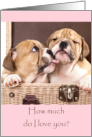 Cute Puppies Valentines Card