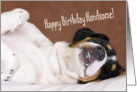 Birthday Card - Humorous Snoozing Dog card