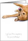 Birthday Card - Humorous Dog Sticking Out Tongue card