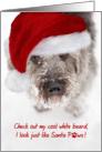 Christmas Card - Snowy Faced Pup in Santa Hat card