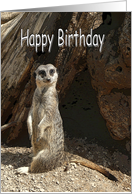 Happy Birthday Card with Cute Meerkat card