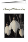 Happy Mother's Day Card, with sepia snowdrops card