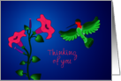Pretty Red-Throat Hummingbird and Petunias, Editable card