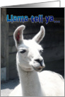 Happy Birthday - Funny Llama card