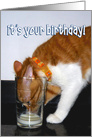Happy Birthday - Funny Cat Drinking from Glass card