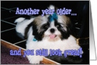 Birthday Humor - Shih-Tzu Puppy with Blue Bow card