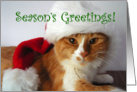 Season's Greetings - Cat in Santa Hat card
