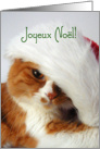 Joyeux No�l - Cat in Santa Hat card