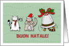 Merry Christmas General (Italian) - Cute cats play music with bells card
