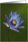 Love for Lotus 2, a flower painting by Adam Thomas. card