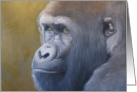 A portrait of Taz the gorilla by Adam Thomas card