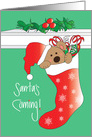 Santa's Coming for Child's Christmas, Bear in Santa Hat in Stocking card