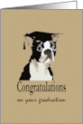 Graduation boston terrier, terrier wearing graduation cap card