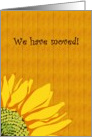 Sunflower moving announcement, sunflower against wood panel card