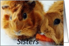Thank You, Guines pig sisters card