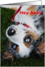puppy, hey baby, love card