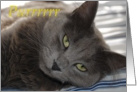 Love, Romance, gray cat, purrr card