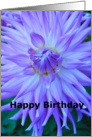 purple dahlia, birthday card