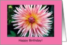 pink dahlia, birthday card