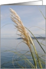 Sea oats, blank card