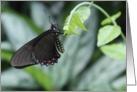 butterfly, blank card
