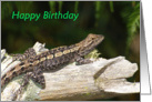 Dragon Lizard Birthday card