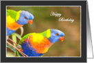 Rainbow Lorikeets Birthday Greeting card