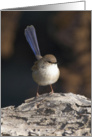 Superb Blue Fairywren Blank Card