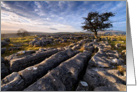 Birthday, Limestone Pavement and lone tree - The Yorkshire Dales card
