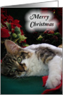 Merry Christmas Kitten, Wide-eyed Holiday Cat card