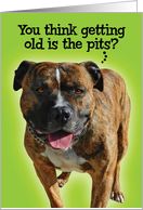 Funny Getting Old is the Pits (Pitbull) Birthday Card