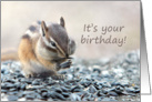 Chipmunk Eating Outdoor Birthday Card
