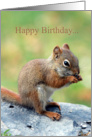Red Squirrel Humor Friend Birthday Card