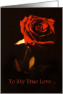 Dark Red Rose True Love Gothic Emo Card