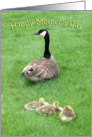 Goose with Goslings Mother's Day Card