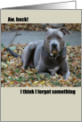 American Pit Bull Terrier Belated Birthday Card